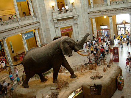 National Museum of Natural History (Smithsonian)