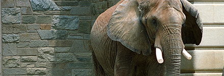 Top 10 Things to See in Washington, D.C. -- The National Zoo