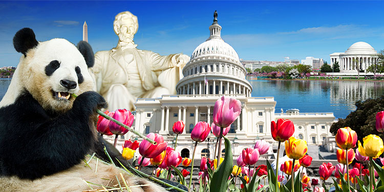 Washington DC Tourist Information Hotel and travel tips for – Washington DC Tourist Map